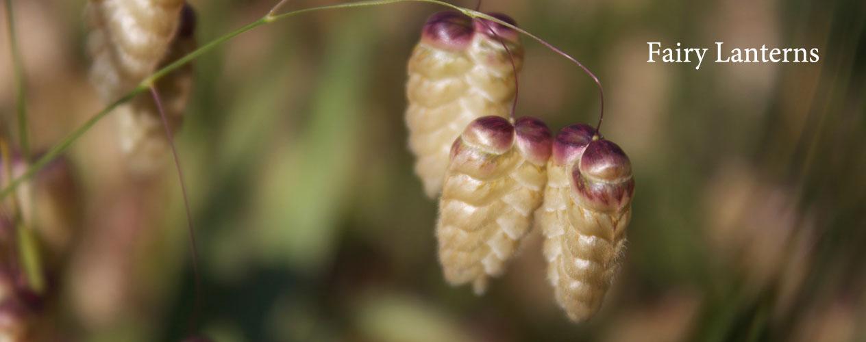 lavender,thyme,kalymnian honey,kalymnos,rock climbing,oregano,wild spices