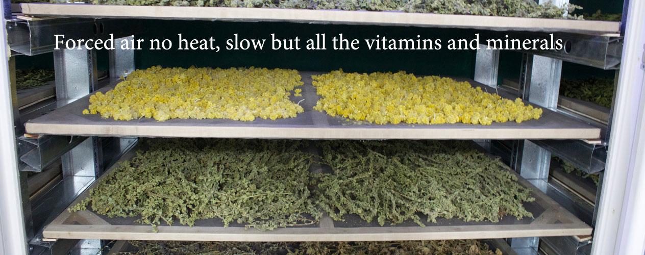 kalymnos herb walk,kalliope patelli,Kalymnos Herbs,organic herbs,natural herbs